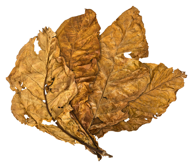 Tobacco-Tobacco-Leaf-Tobacco-dekotabak-200g-20kg-and-sample-listing-of-Euro-Tobacco thumbnail 5