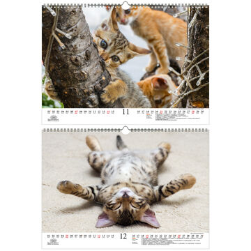 Tierzauber lustige Katzen DIN A3 Kalender für 2021 lustige ...