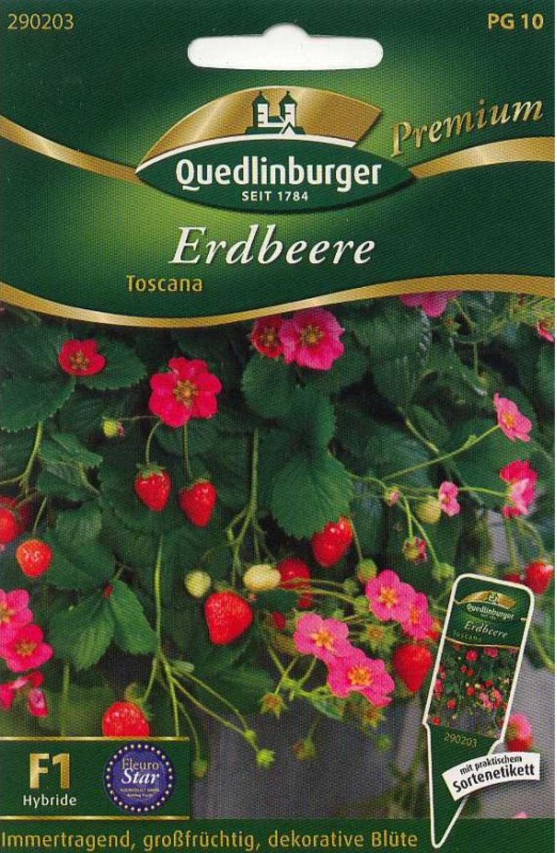 Monatserdbeere Rügen für ca 100 Pflanzen Samen Saatgut Erdbeerpflanze Obst