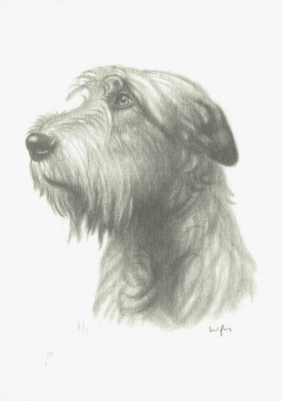 2 Postkarten Hunde - Irischer Wolfshund / Irish Wolfhound [z032] | eBay