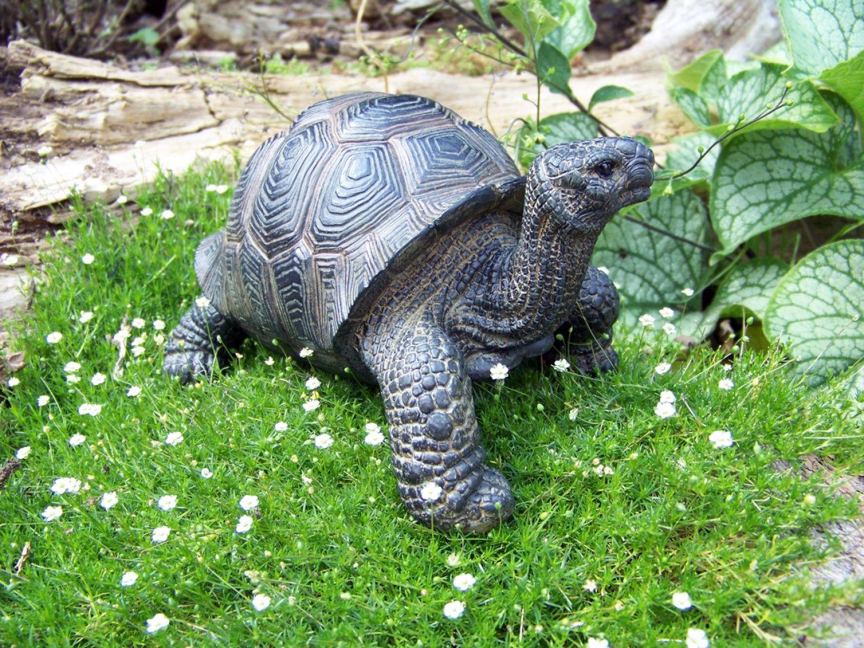Schildkröte Deko Landschildkröte Figur Gartenfigur Tierfigur Reptil Nur Abholung